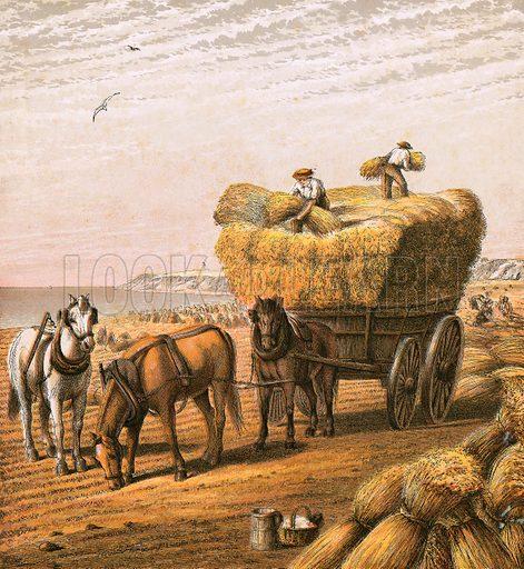 Bringing in the harvest.  Aunt Louisa