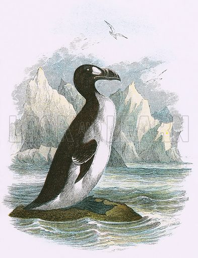Great Auk. A Hand-Book to the Birds of Great Britain by R. Bowdler Sharpe (1896).