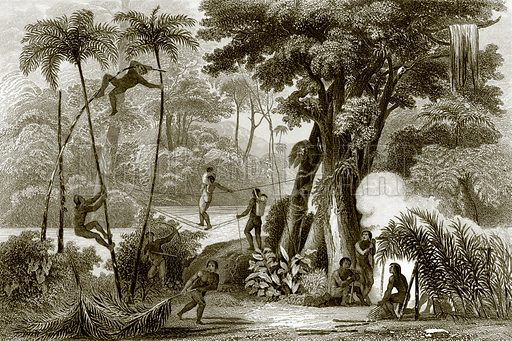 A scene in the Brazilian forest. Payne's Universum (1847).