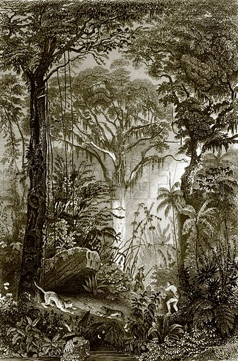 A scene in the Brazilian forest. Payne