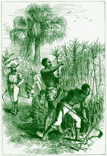 Slaves working on a plantation. Illustration from Cassell's History of the United States by Edward Ollier (c 1900).