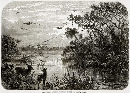 Scene upon a creek, Tributary to the St John's, Florida. Illustration from Cassell's History of the United States by Edward Ollier (c 1900).