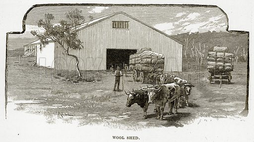 Wool Shed. Illustration from Cassell's Picturesque Australasia by EE Morris (c 1889).