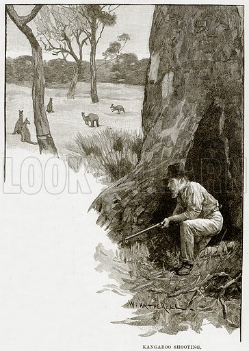 Kangaroo shooting. Illustration from Cassell's Picturesque Australasia by EE Morris (c 1889).