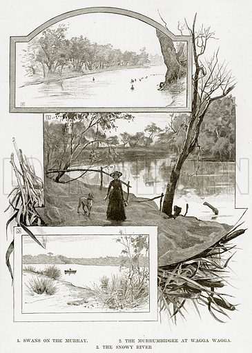 1. Swans on the Murray. 2. The Murrumbidgee at Wagga Wagga. 3. The Snowy River. Illustration from Cassell's Picturesque Australasia by EE Morris (c 1889).