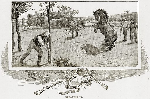 Breaking in. Illustration from Cassell's Picturesque Australasia by EE Morris (c 1889).