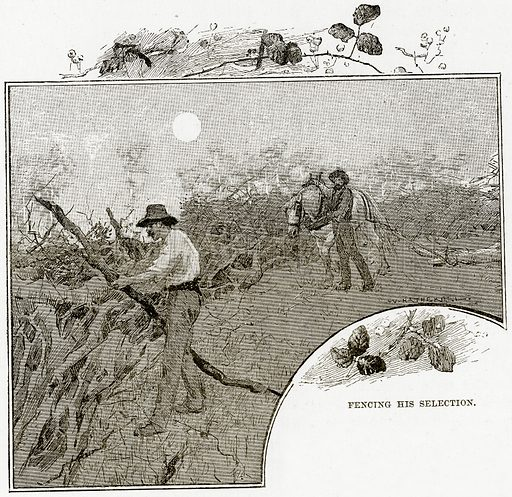 Fencing his selection. Illustration from Cassell's Picturesque Australasia by EE Morris (c 1889).