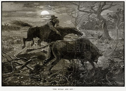 """""""The Bulls are off"""". Illustration from Cassell's Picturesque Australasia by EE Morris (c 1889)."""