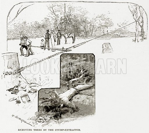 Removing trees by the Stump-Extractor. Illustration from Cassell's Picturesque Australasia by EE Morris (c 1889).