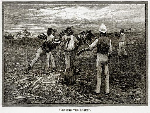 Clearing the Ground. Illustration from Cassell's Picturesque Australasia by EE Morris (c 1889).