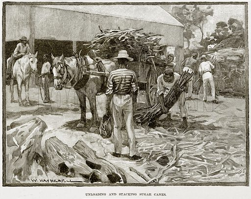 Uploading and stacking Sugar Canes. Illustration from Cassell's Picturesque Australasia by EE Morris (c 1889).