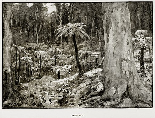Fernshaw. Illustration from Cassell's Picturesque Australasia by EE Morris (c 1889).