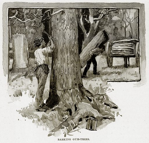 Barking Gum-Trees. Illustration from Cassell's Picturesque Australasia by EE Morris (c 1889).