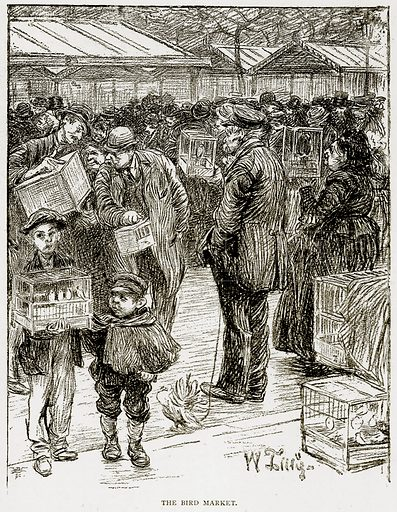 The Bird Market. Illustration from Old and New Paris by H Sutherland Edwards (Cassell, 1893).