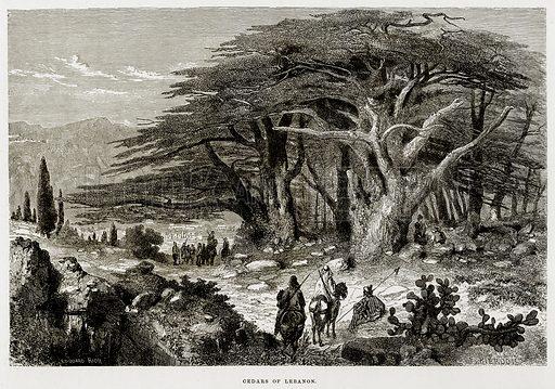 Cedars of Lebanon. Illustration from The Mediterranean Illustrated (T Nelson, 1880).
