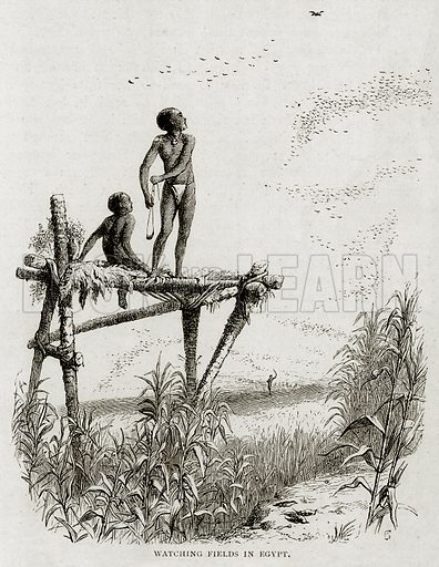 Watching Fields in Egypt. Illustration from Land of the Pharaohs by Samuel Manning (Religious Tract Society, c 1880).