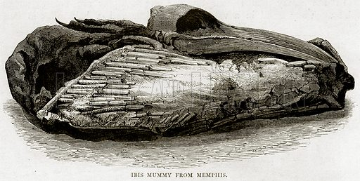 Ibis Mummy from Memphis. Illustration from Land of the Pharaohs by Samuel Manning (Religious Tract Society, c 1880).