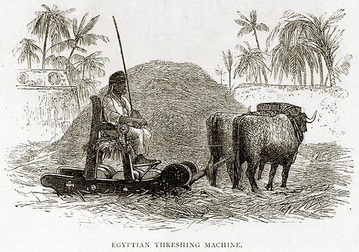 Egyptian Threshing Machine. Illustration from Land of the Pharaohs by Samuel Manning (Religious Tract Society, c 1880).