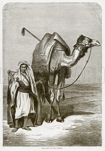 The Ship of the Desert. Illustration from Land of the Pharaohs by Samuel Manning (Religious Tract Society, c 1880).