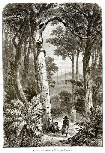 A Native climbing a tree for Opossum. Illustration from Australian Pictures by Howard Willoughby (Religious Tract Society, c 1886).