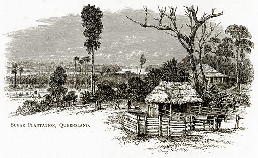 Sugar Plantation, Queensland. Illustration from Australian Pictures by Howard Willoughby (Religious Tract Society, c 1886).