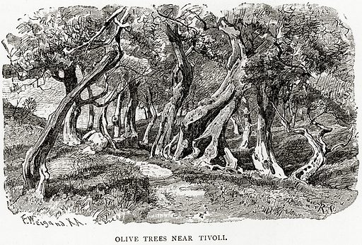 Olive Trees near Tivoli. Illustration from Italian Pictures by Samuel Manning (Religious Tract Society, c 1880).