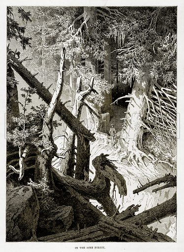 In the Pine Forest. Illustration from Swiss Pictures by Samuel Manning (Religious Tract Society, c 1870).