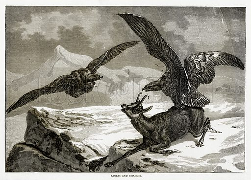 Eagles and Chamois. Illustration from Swiss Pictures by Samuel Manning (Religious Tract Society, c 1870).