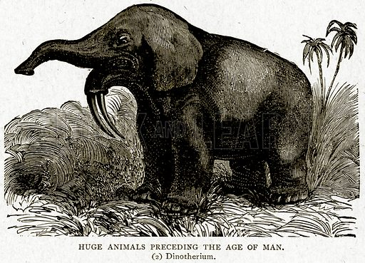 Huge Animals preceding the Age of Man. (2) Dinotherium. Illustration from With the World