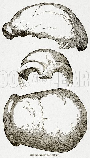 The Neanderthal Skull. Illustration from With the World