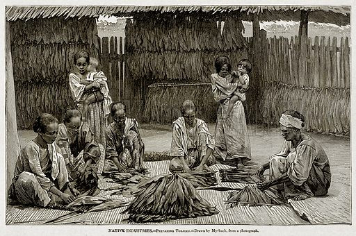 Native Industries.--Preparing Tobacco. Illustration from With the World's People by John Clark Ridpath (Clark E Ridpath, 1912).