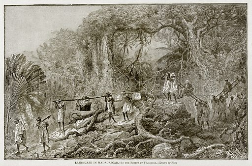 Landscape in Madagascar.--In the Forest of Filanjana. Illustration from With the World's People by John Clark Ridpath (Clark E Ridpath, 1912).