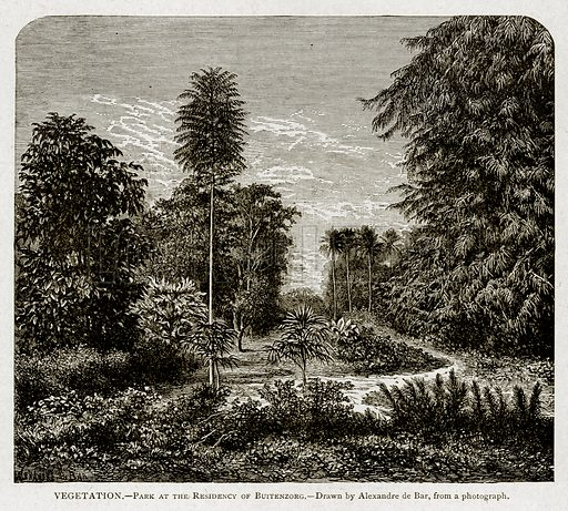 Vegetation. – Park at the Residency of Buitenzorg. Illustration from With the World's People by John Clark Ridpath (Clark E Ridpath, 1912).