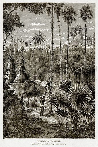 Wine-Palm Harvest. Illustration from With the World's People by John Clark Ridpath (Clark E Ridpath, 1912).