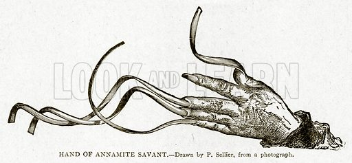 Hand of Annamite Savant. Illustration from With the World's People by John Clark Ridpath (Clark E Ridpath, 1912).