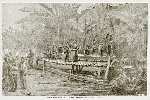 Winnowing Rice in Palm Grove. Illustration from With the World's People by John Clark Ridpath (Clark E Ridpath, 1912).