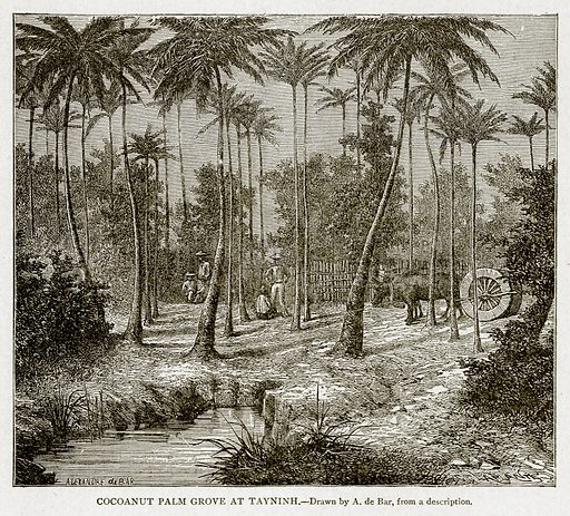 Cocoanut Palm Grove at Tayninh. Illustration from With the World's People by John Clark Ridpath (Clark E Ridpath, 1912).