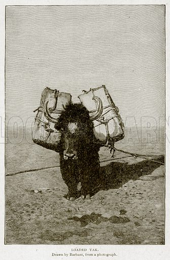Loaded Yak. Illustration from With the World's People by John Clark Ridpath (Clark E Ridpath, 1912).