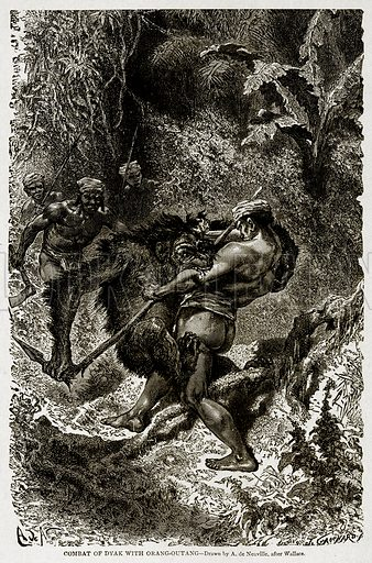 Combat of Dyak with Orang-Outang. Illustration from With the World