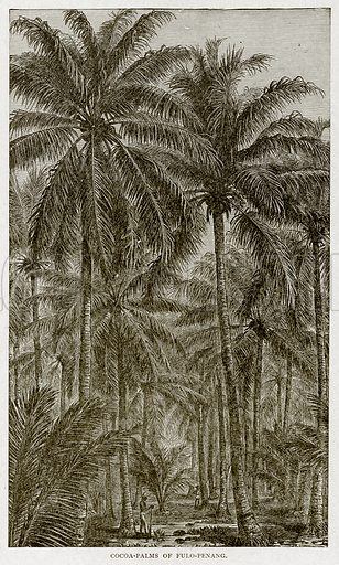 Cocoa-Palms of Fulo-Penang. Illustration from With the World's People by John Clark Ridpath (Clark E Ridpath, 1912).