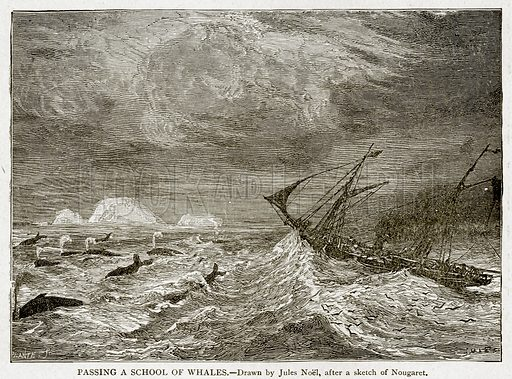 Passing a School of Whales. Illustration from With the World's People by John Clark Ridpath (Clark E Ridpath, 1912).