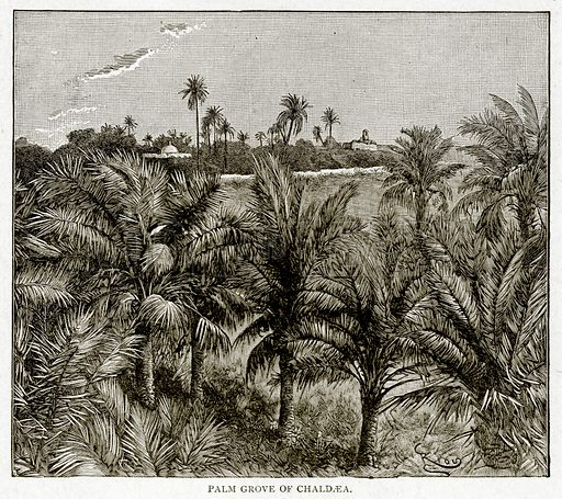 Palm Grove of Chaldaea. Illustration from With the World's People by John Clark Ridpath (Clark E Ridpath, 1912).