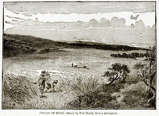 Fields of Boaz. Illustration from With the World's People by John Clark Ridpath (Clark E Ridpath, 1912).