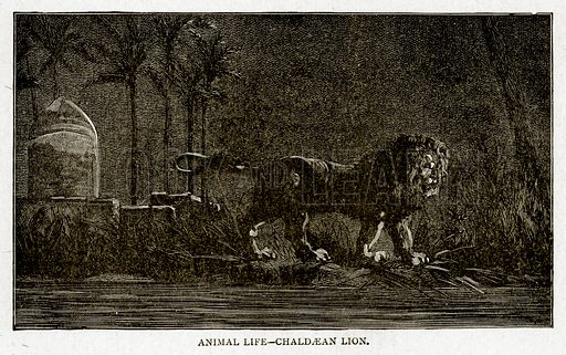 Animal Life--Chaldaean Lion. Illustration from With the World's People by John Clark Ridpath (Clark E Ridpath, 1912).