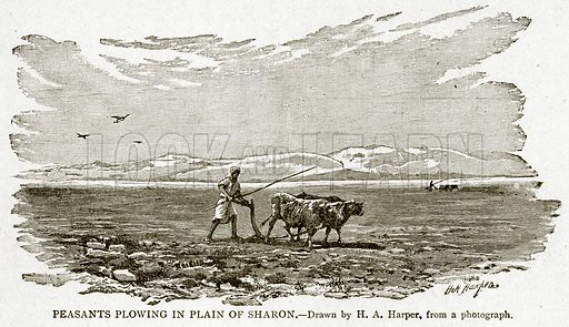 Peasants Plowing in Plain of Sharon. Illustration from With the World's People by John Clark Ridpath (Clark E Ridpath, 1912).
