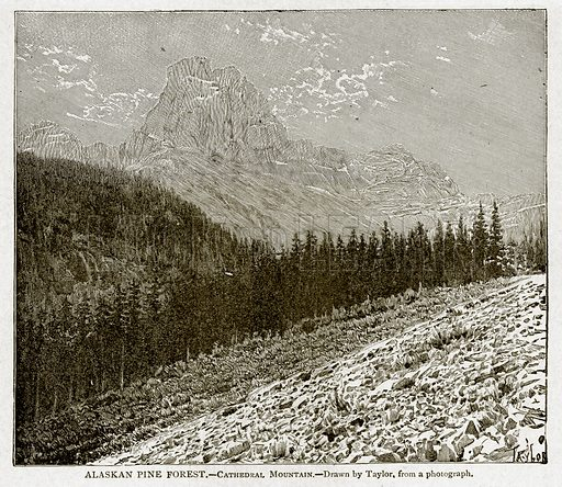 Alaskan Pine Forest. – Cathedral Mountain. Illustration from With the World's People by John Clark Ridpath (Clark E Ridpath, 1912).