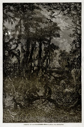 Forest of Konkrouson. Illustration from With the World's People by John Clark Ridpath (Clark E Ridpath, 1912).
