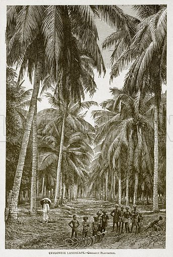 Cevlonese Landscape. – Cocoanut Plantation. Illustration from With the World's People by John Clark Ridpath (Clark E Ridpath, 1912).