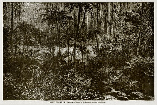 Forest Scene in Ceylon. Illustration from With the World's People by John Clark Ridpath (Clark E Ridpath, 1912).