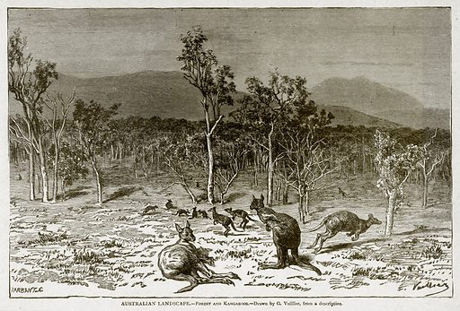 Australian Landscape. – Forest and Kangaroos. Illustration from With the World's People by John Clark Ridpath (Clark E Ridpath, 1912).